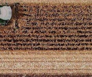 Çiftçi Buğday Ekmiyor, Ekemiyor !