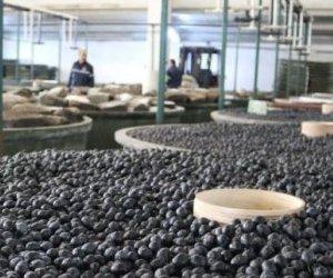 Marmarabirlik'ten Çiftçiye 110 milyon TL